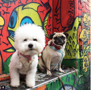 Photo Credit: @jemappelle.mochi | A photo of two dogs at Graffiti Alley, Toronto.